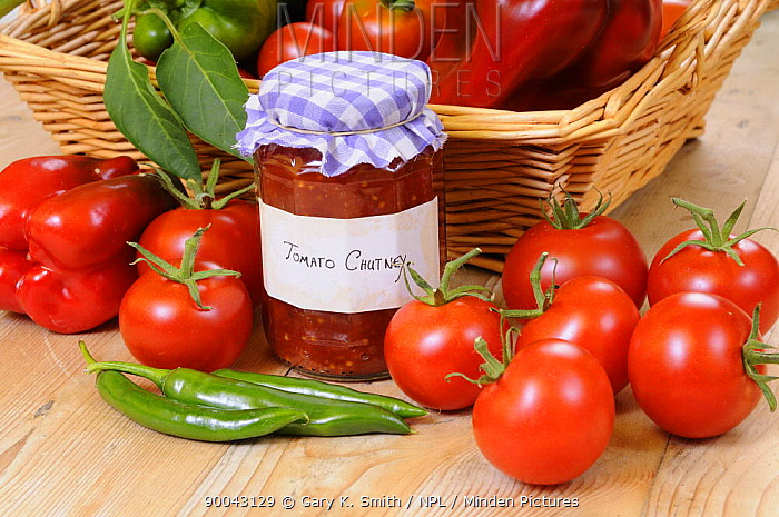 Country Kitchen scene with home made chutney and ingredients, tomatoes and peppers, UK, September  -  Gary K. Smith/ npl