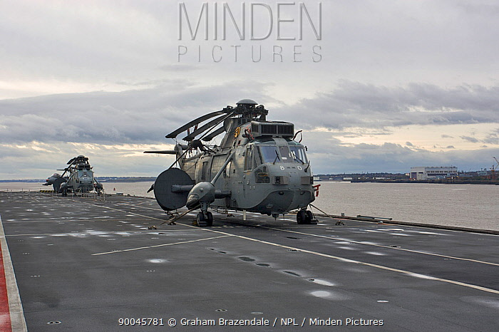 Sea King ASaC7 Helicopter on flight deck of Aircraft Carrier HMS Illustrious at Liverpool, UK October 2008  -  Graham Brazendale/ npl