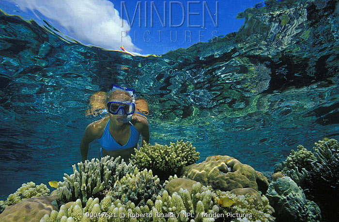 Snorkeler looking at healthy coral reef, Walea, Sulawesi, Indonesia  -  Roberto Rinaldi/ npl
