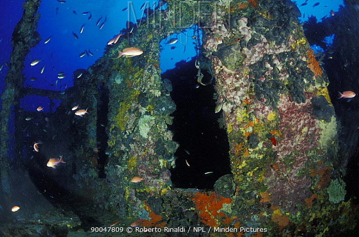 Bowfield wreck, formerly called Relitto del Faro (the lighthouse wreck), Messina, Italy  -  Roberto Rinaldi/ npl