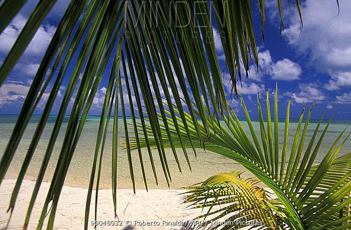 A white sandy beach viewed through palm leaf fronds, Lighthouse Reef Resort, Belize  -  Roberto Rinaldi/ npl