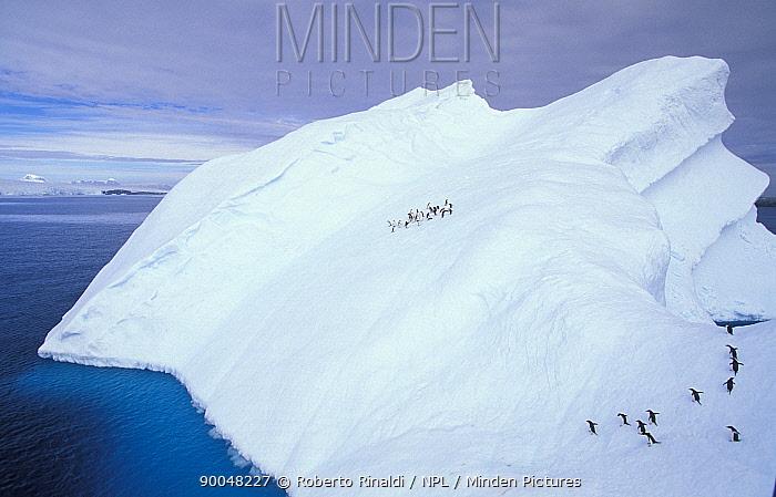Adelie Penguin (Pygoscelis adeliae) on a weathered iceberg, Antarctic Peninsula, Antarctica  -  Roberto Rinaldi/ npl