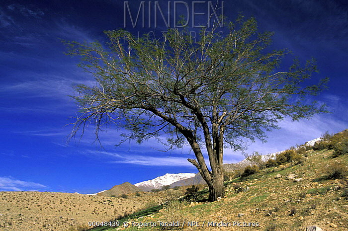 Elqui valley in the middle of the Andes, Chile  -  Roberto Rinaldi/ npl