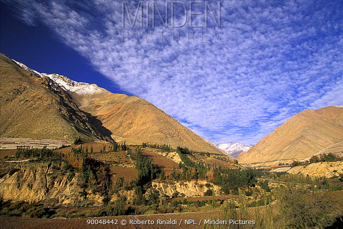 The Elqui valley in the middle of the Andes has arid mountain sides but the valley itself is very fertile, Chile  -  Roberto Rinaldi/ npl