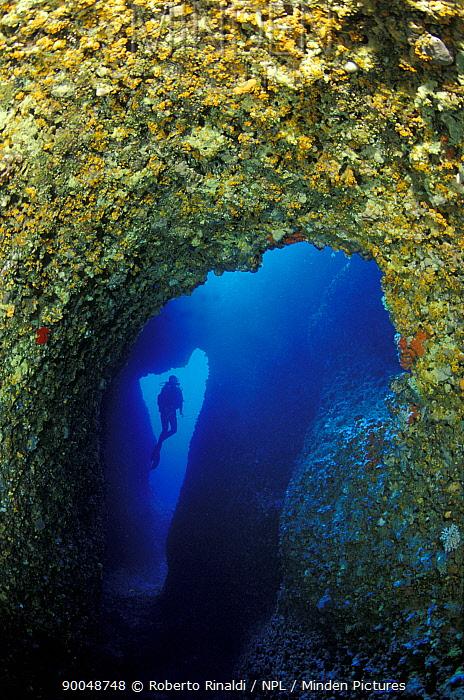Diver in entrance to Nereo cave (Grotta di Nereo), with yellow cave coral (Leptosammia pruvoti) in the foreground Capo Caccia, Alghero, Sardinia, Italy  -  Roberto Rinaldi/ npl