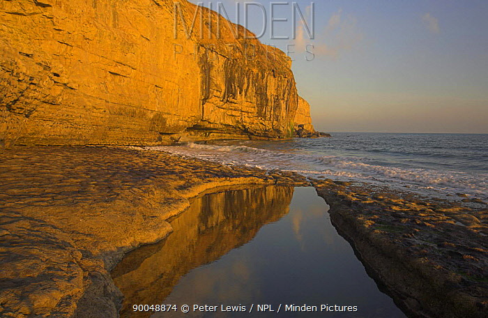 Cliffs reflected in a rock pool at Dancing Ledge near Swanage, Dorset Jurassic Coast World Heritage Site November 2006  -  Peter Lewis/ npl