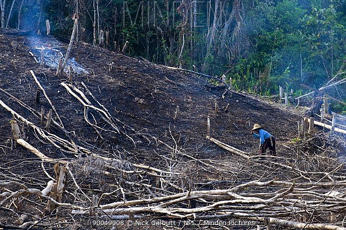 Forest felling on the edge of Kinabalu NP, Sabah, Borneo, Malaysia  -  Nick Garbutt/ npl