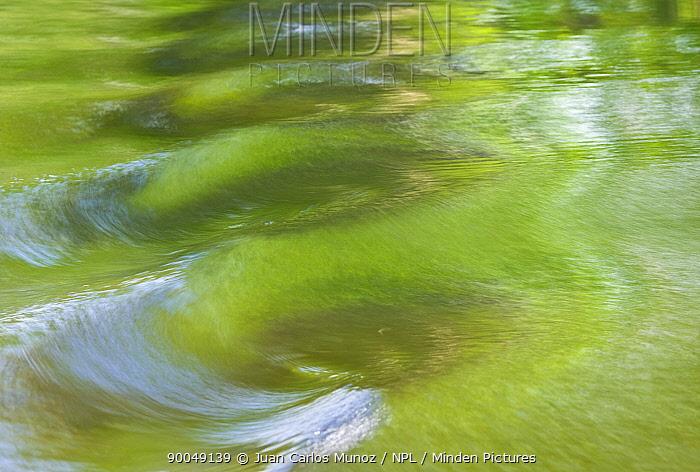 Woodland reflections on river water, Finland  -  Juan Carlos Munoz/ npl