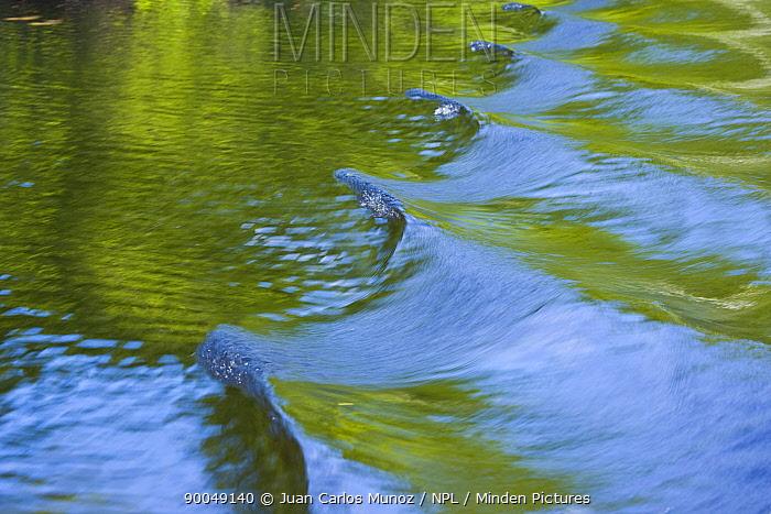 Woodland reflections on river water with boat wake, Finland  -  Juan Carlos Munoz/ npl