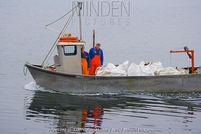 Atlantic Salmon (Salmo salar) fish farm, transporting the fish, Baltasounds, Unst Island, Shetland Islands, Scotland United Kingdom  -  Juan Carlos Munoz/ npl