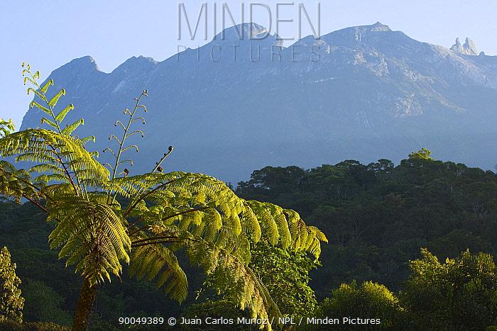 Mount Kinabalu in the Mount Kinabalu NP, Sabah, Borneo, Malaysia 2007  -  Juan Carlos Munoz/ npl