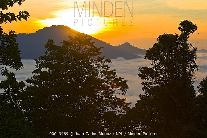 Sun rising over the rainforest, Danum valley forest reserve, Sabah, Borneo, Malaysia 2007  -  Juan Carlos Munoz/ npl