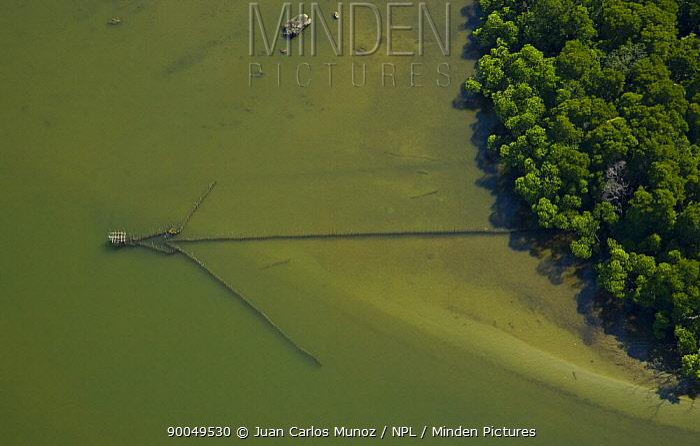 Aerial view of river, mangroves and fishing nets in lowland rainforest, Rio Sungai Kinabatangan, Sabah, Borneo, Malaysia  -  Juan Carlos Munoz/ npl