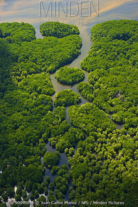 Aerial view of lowland rainforest on banks of River Kinabatangan, Sabah, Borneo, Malaysia  -  Juan Carlos Munoz/ npl
