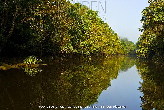Lowland rainforest and River Sungai Kinabatangan, Sabah, Borneo, Malaysia 2007  -  Juan Carlos Munoz/ npl