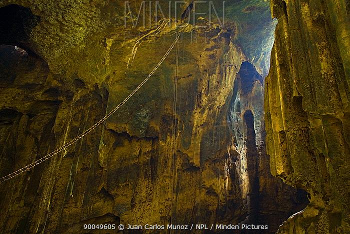 Inside the Gomantong caves with ladder for collecting Swiftlet nests, River Sungai Kinabatangan, Sabah, Borneo, Malaysia 2007  -  Juan Carlos Munoz/ npl