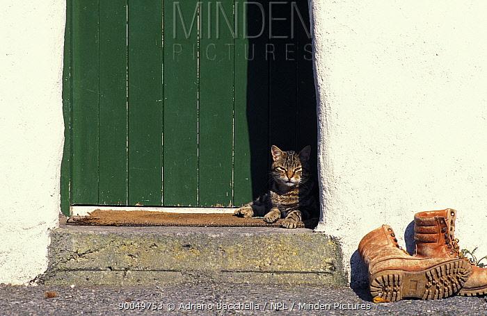 Domestic Cat (Felis catus)Tabby cat resting in open doorway, Italy  -  Adriano Bacchella/ npl