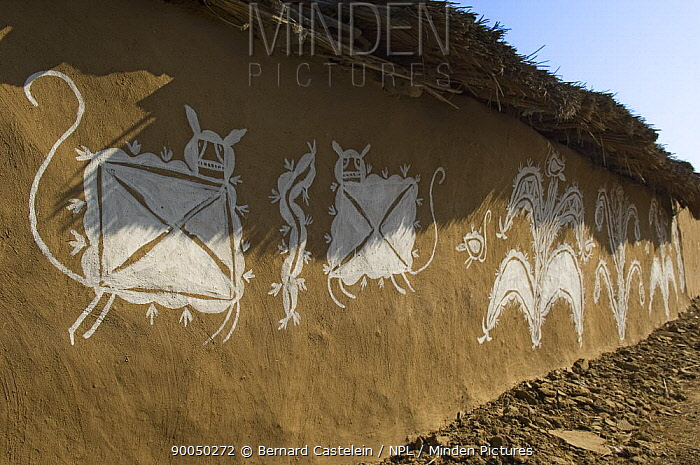 Traditional painting of plants and animals on mud wall of house during Diwali festival, Bada Gaire Killa village, South of Tonk, Rajasthan, India  -  Bernard Castelein/ npl