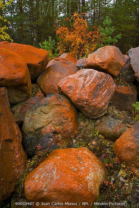 Rocks in taiga woodland, Laponia, Lappland, Finland  -  Juan Carlos Munoz/ npl