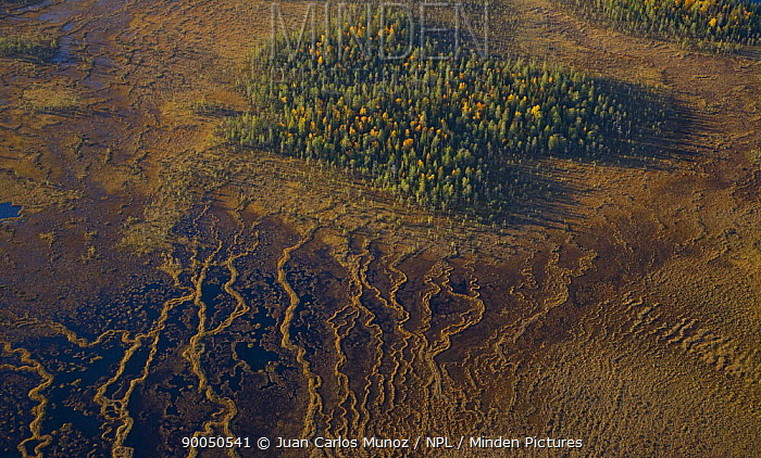 Aerial view of peat wetlands and woodlands, Laponia, Lappland, Finland  -  Juan Carlos Munoz/ npl