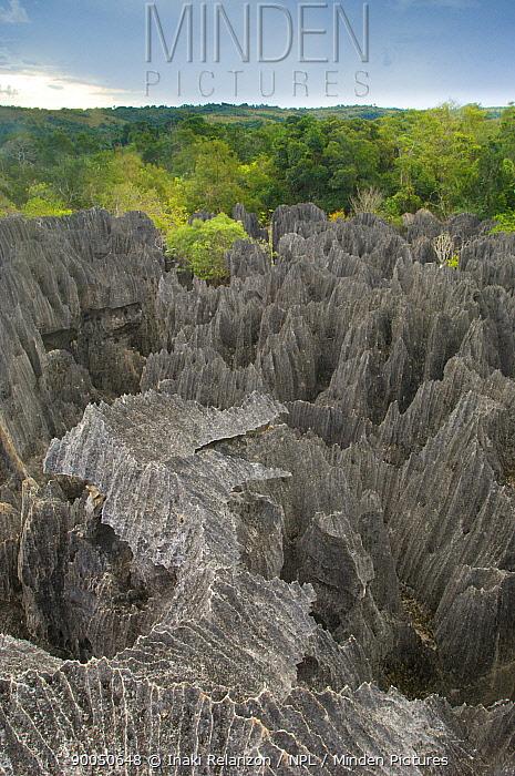 Les Petits Tsingys (The small Tsingys), Tsingys de Bemaraha National Park, East Madagascar  -  Inaki Relanzon/ npl