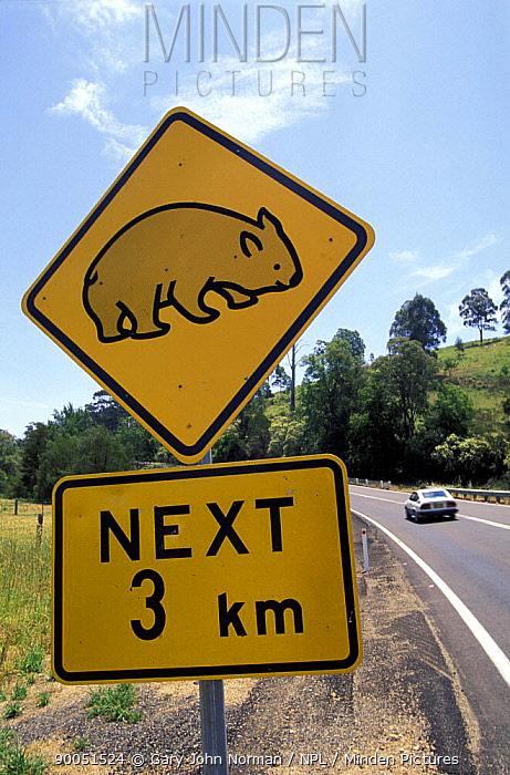 Common Wombat (Vombatus ursinus) road sign crossing  -  Gary John Norman/ npl