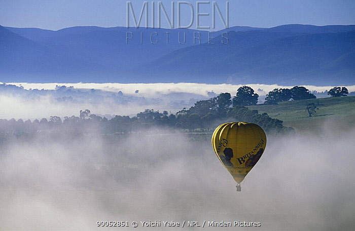 Hot air ballooning above early morning mist near Melbourne, Victoria, Australia March 1995  -  Yoichi Yabe/ npl