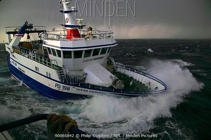 MFV coming alongside partner vessel to start pair trawling operations North Sea, 2009  -  Philip Stephen/ npl