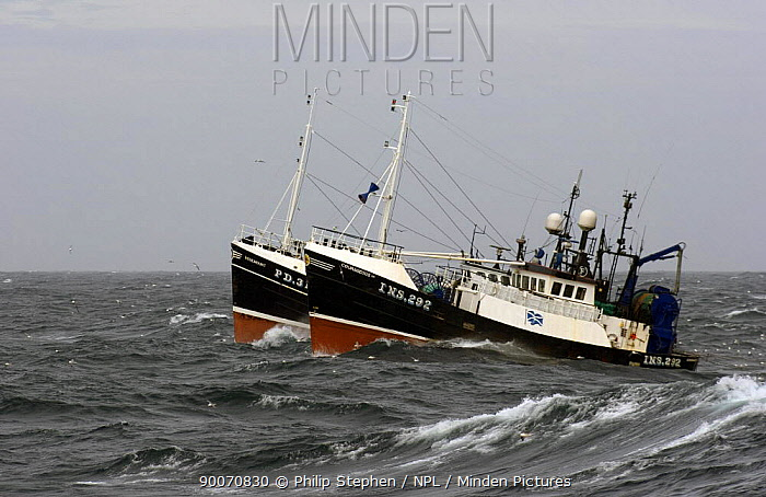 Pair fishing trawlers motoring alongside each other to haul their nets, North Sea  -  Philip Stephen/ npl
