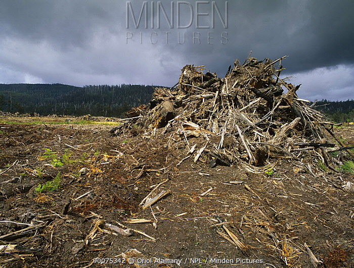 Clear-cut old-growth forest, Southern Forests, Tasmania Island, Australia, December  -  Oriol Alamany/ npl