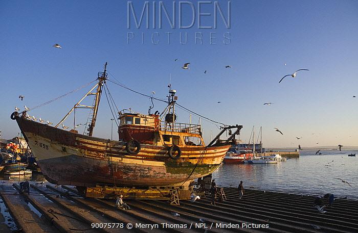 Fishing boat pulled up on slipway in Essaouira fishing port, Morocco November 2008  -  Merryn Thomas/ npl