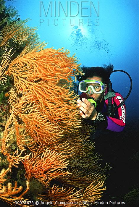 Diver examining a gorgonian (Gorgonia sp) fan off Sorrento, Southern Italy  -  Angelo Giampiccolo/ npl