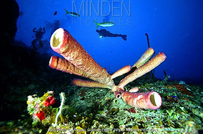 Diver shining torch on sponges, Maria La Gorda, Cuba  -  Angelo Giampiccolo/ npl
