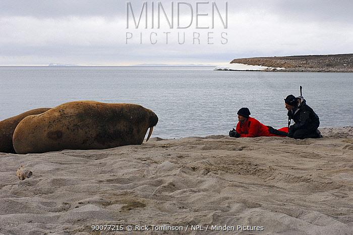 Walrus (Odobenus rosmarus) watched by tourists on the beach, Spitsbergen, Norway  -  Rick Tomlinson/ npl