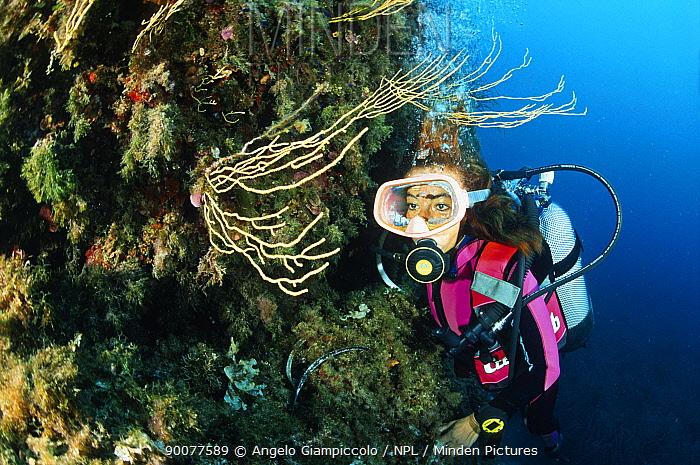 Scuba diver looking at yellow gorgonian Sea fans (Gorgonia sp) in the entrance of the Alabaster Cave (La Grotta dell'Alabastro), Marina di Camerota, Campania, Italy  -  Angelo Giampiccolo/ npl