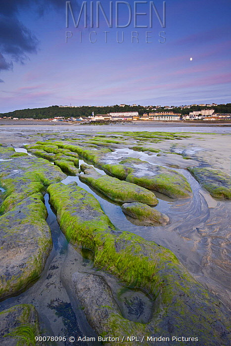 Sandstone formations exposed at low tide at Westward Ho, Devon, England  -  Adam Burton/ npl