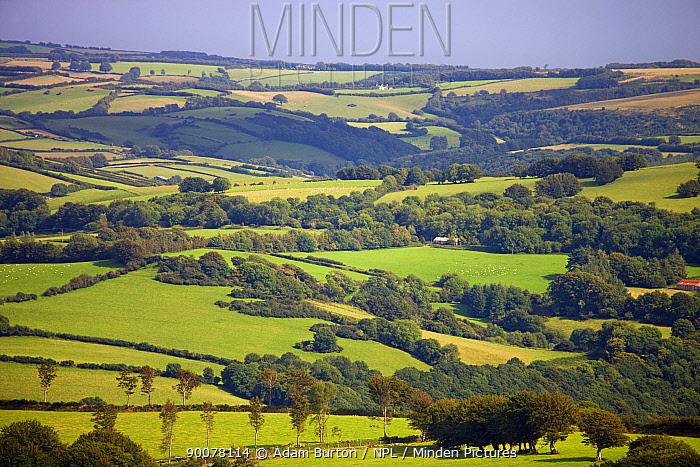 Rolling green patchwork landscape in summer, Exmoor National Park, Somerset, England  -  Adam Burton/ npl
