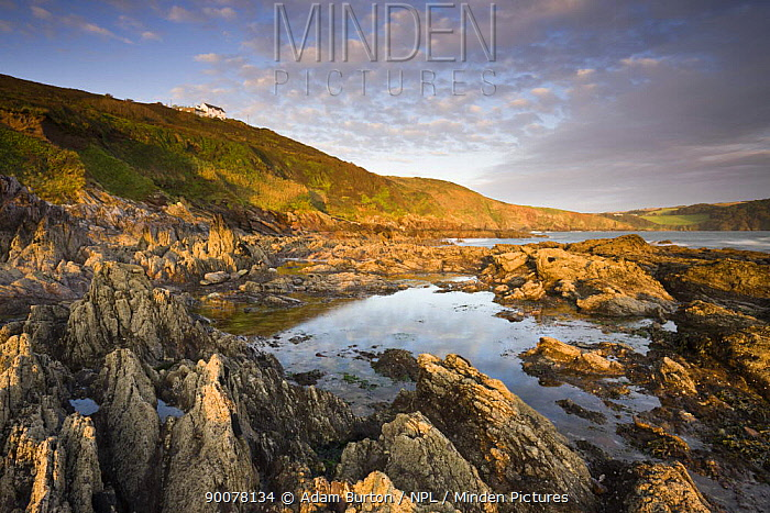 Coastal rock formations at Wembury Bay in Devon, England  -  Adam Burton/ npl