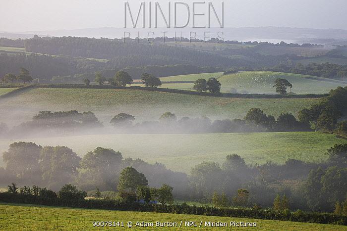 Mist hangs low over grass fields at dawn in rural Devon, Crediton, Devon, England  -  Adam Burton/ npl