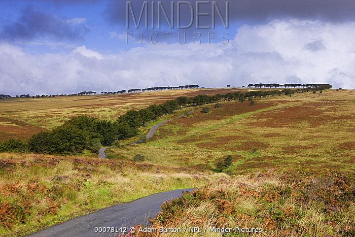 Moorland near Alderman's Barrow Allotment, Exmoor National Park, Somerset, England  -  Adam Burton/ npl