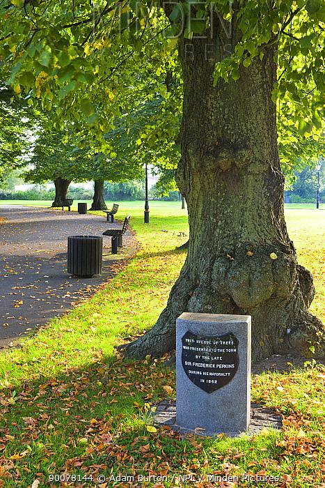 Early autumn in Andrews Park, Southampton City Centre, Hampshire  -  Adam Burton/ npl