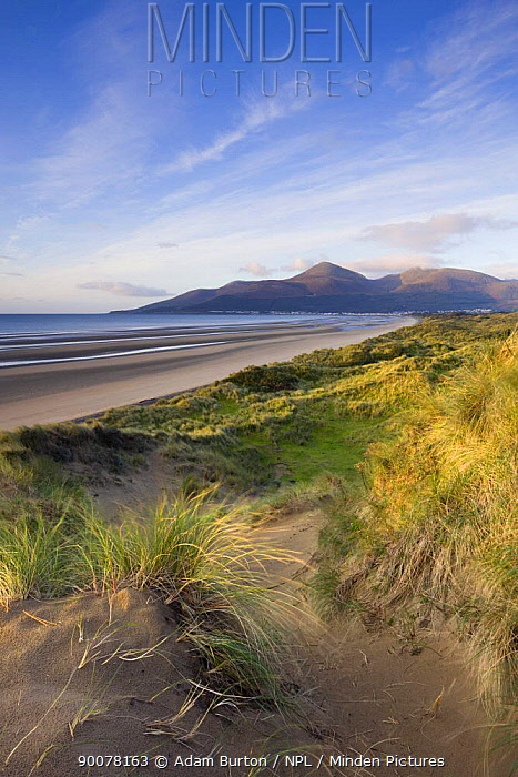 Sand dunes at Murlough Nature Reserve, with views to Dundrum Bay and the Mountains of Mourne beyond County Down, Northern Ireland  -  Adam Burton/ npl