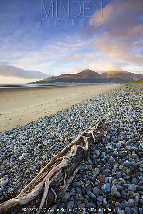 Drfitwood on Dundrum Bay looking towards the Mountains of Mourne, County Down, Northern Ireland  -  Adam Burton/ npl