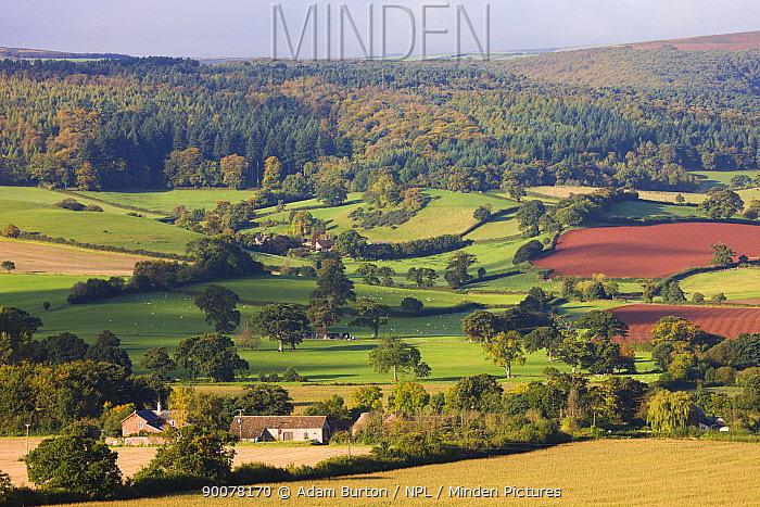 Rolling countryside near the village of Luccombe Exmoor National Park, Somerset, England  -  Adam Burton/ npl