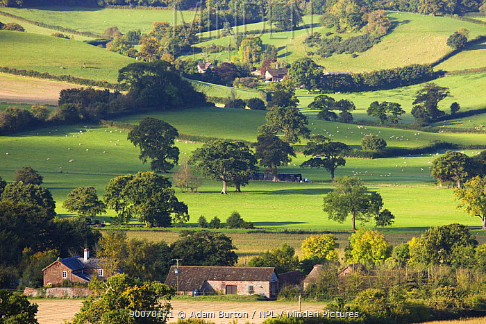 Looking across countryside with farm buildings and houses to Blackford and Luccombe, Exmoor National Park, Somerset, England  -  Adam Burton/ npl