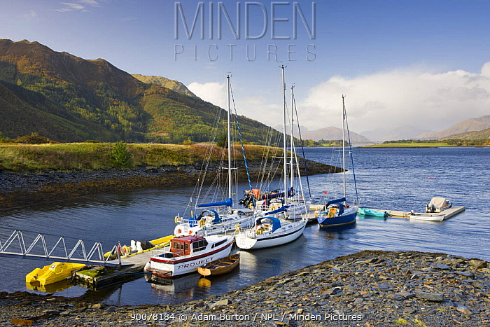 Yachts moored on Loch Linnhe at Ballachulish, Highlands, Scotland  -  Adam Burton/ npl