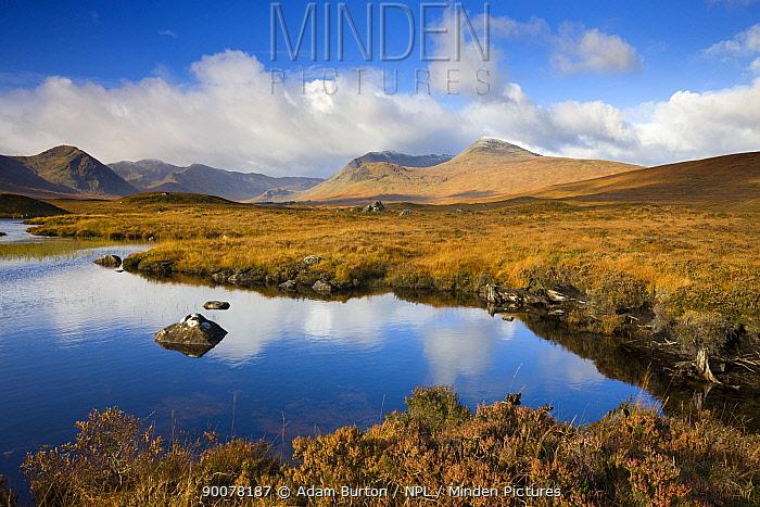 Rannoch Moor in the autumn, Scottish Highlands, Scotland  -  Adam Burton/ npl