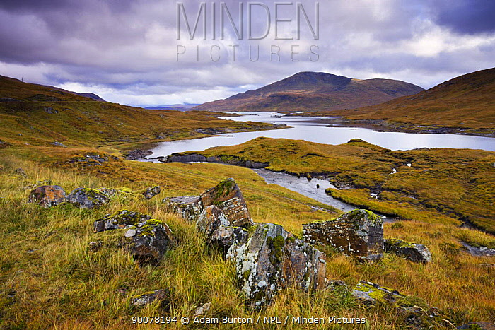 Autumn moorland and mountains beside Loch Quoich, Highlands, Scotland  -  Adam Burton/ npl