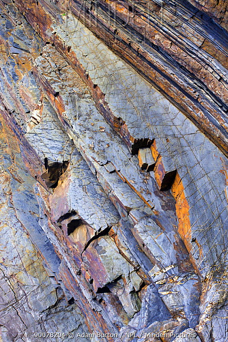 Rock strata on the coastal cliffs at Sandymouth Bay in North Cornwall, England, November 2008  -  Adam Burton/ npl