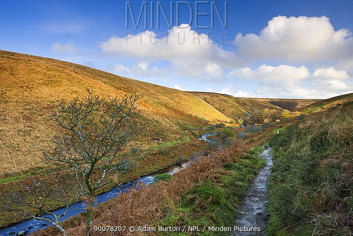 Badgworthy Water and the Doone Valley in Autumn, Exmoor National Park, Somerset, England  -  Adam Burton/ npl